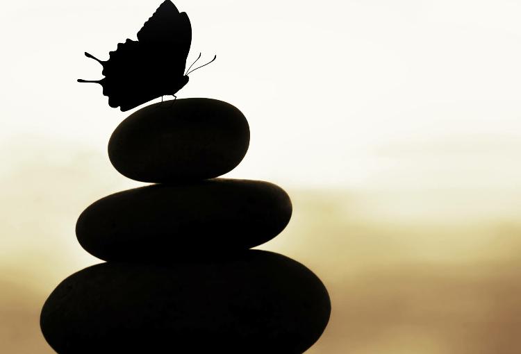 butterfly on rocks