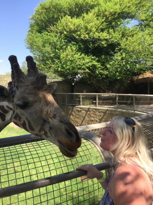 giraffe leaning over fence to kiss blonde middle aged woman